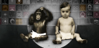 What Are The Planet's Real 'Talking' Chimps And Gorillas Saying?