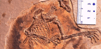 The Earliest Airborne Mammals May Have Glided Among the Dinosaurs 160 Million Years Ago
