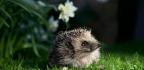 Ordinary People Are Doing Vital Wildlife Work. How? Counting Hedgehog Homes | Hugh Warwick