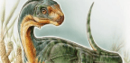 Chilesaurus Is the Dinosaur Discovery of the Century | Brian Switek