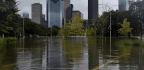 Will Flooding in Texas Lead to More Mosquito-Borne Illness?