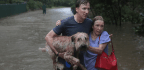 A Bipartisan Bill Helped Save Pets From Harvey, And Maybe Their Humans Too