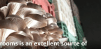 Syrians in a Besieged Town Are Learning to Grow Mushrooms to Survive