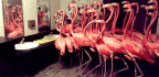 Flamingos In The Men's Room
