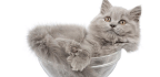 This Year's Ig Nobel Prizes for Unusual Research Honored Old Man Ears and the Fluidity of Cats