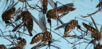 Is There a Future for a Zika Vaccine?