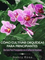 Cómo Cultivar Orquídeas Para Principiantes