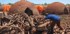 Report Reveals a Company Linked to Paraguayan Minister Drives Deforestation in the Chaco Region