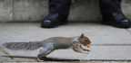 Squirrels Sort Their Nuts Like You Sort Your Fridge