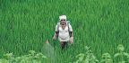 Maharashtra Farmers Fall Prey to Unauthorised Pesticides and State Apathy