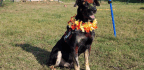 In Nepal, Every Dog Has Its Day—and That Day Is Called Kukur Tihar