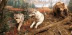 New Wonders of Wildlife Aquarium and Museum Turns Conservation Knob to 11