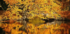 Autumn Has Always Been Poets' Season
