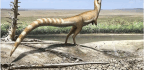 The Coloring of a Raccoon-Eyed Dinosaur Could Reveal Its Habitat