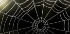 Spider Silk Could Help Build a Better Hearing Aid. Here's How