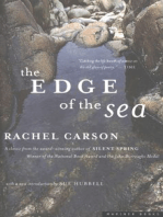 The Edge of the Sea
