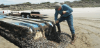 Japanese Tsunami Debris Carried New Species to U.S.