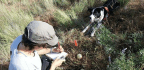 Meet the Very Good Dogs Who Hunt Down Invasive Species