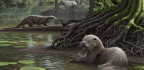 These Ancient Wolf-Sized Otters Had Fearsome Jaws