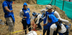Digging Up Land Mines