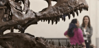 Yes, the Dinosaurs Were Incredibly 'Unlucky'. Just as Well for Us | Brian Switek