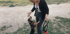 Paid Leave to Care for Pets? For More Italians, the Answer Is 'Sì!'