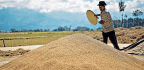 For Nagaland, Being Self Sufficient in Rice Production Is Not an Impossible Dream