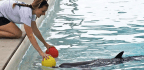How to Cheer Up a Dolphin in Captivity