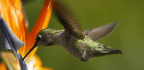 Hummingbirds Are Where Intuition Goes to Die
