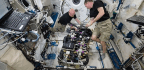 The Microbes Making Themselves at Home on the Space Station