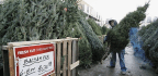 The Christmas-Tree Shortage Could Last for Years