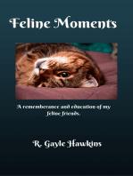 Feline Moments