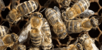 Hurricane Destruction May Have Doomed Honeybees