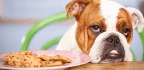 What to Do if Your Dog Eats Your Christmas Chocolates