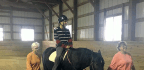 Giant Steps Uses Horses to Help Adults With Autism