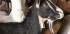 Helping Farmed Animals