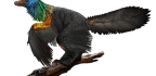 Dinosaur's Feathers Shimmered Like a Rainbow