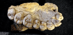 New Fossil Found In Israel Suggests A Much Earlier Human Migration Out Of Africa