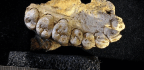 A Jawbone Is the Oldest Modern-Human Fossil Outside of Africa