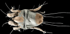 Dust Mites Defend Their Genome In A Unique Way