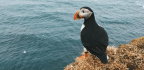 In Awe Of Seabirds At The Edge Of The World