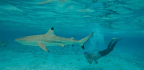 To Fly Faster, Humans Look to Mysteries of Shark Skin