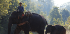 'Voices for Momos' Campaign Seeks to Protect Myanmar's Last Remaining Elephants