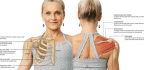 Get to Know … the Shoulder Girdle