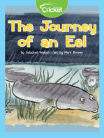 The Journey of an Eel