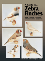 A Guide to Zebra Finches, their Colour Varieties, Management and Breeding