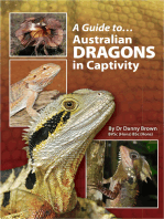 A Guide to Australian Dragons in Captivity