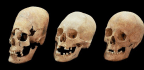 Did Tall Skulls In Ancient Bavaria Belong To Brides?