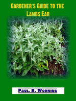 Gardener's Guide to the Lambs Ear