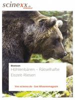 Höhlenbären